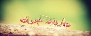 mróweczki
